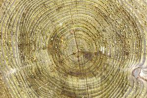 textura de madera rugosa foto