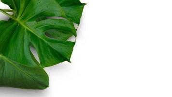 Monstera leaf with copy space photo