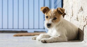 Small puppy lying outside photo