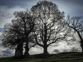 Backlit tree silhouettes with bare winter branches photo