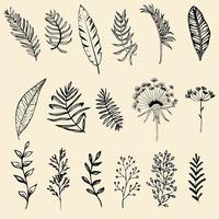 Set of hand drawn leaves vector illustration, flower line art isolated graphic elements for your design.