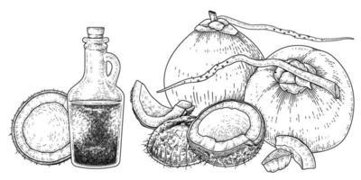 Toda la carne de media cáscara y aceite de coco dibujado a mano vector retro ilustración
