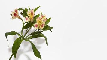 la flor de la flor vista superior foto