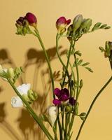 hermosos capullos de flores magenta y blanco foto