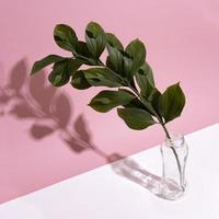 Leaf branch in vase on pink background photo