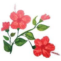 Flowers watercolor illustration vector