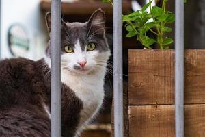 Cat lying behind a barred fence of a house in old Nicosia, Cyprus photo