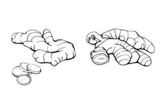jengibre aislado en un fondo blanco. la raíz de jengibre se extrae a mano. productos para fortalecer el sistema inmunológico. Dieta saludable Ilustración de vector dibujado a mano en estilo doodle