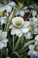 Narcissus or daffodils photo