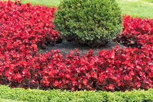 jardín ornamental con flores rojas foto