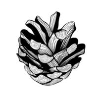 Pine cone.Christmas tree decoration. A pine cone. Hand drawn Botanical vector illustration. Design elements for invitations, holiday decor, greeting cards, prints, printing.Christmas decorations