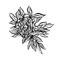 Peonies hand drawn illustration in graphic style. .Design for greeting cards, invitations, printing, textiles vector