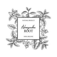 Hand drawn Ashwagandha design with branches and berries isolated on white background. Vector illustration in sketch style.