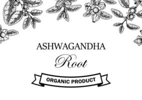 Hand drawn horizontal Ashwagandha design with branches and berries isolated on white background. Vector illustration in sketch style.