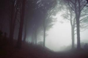 Foggy forest view photo