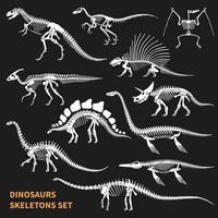 Dinosaurs Skeletons Chalkboard Icons Set Vector Illustration