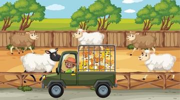 Safari scenes with many sheeps and kids cartoon character vector