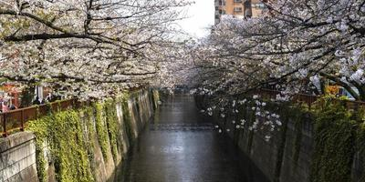 Trees blossoming over a creek in Japan photo
