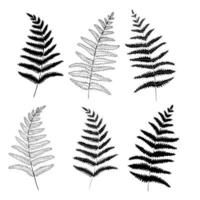 Graphic collection of fern branches set. Coloring book page design, elements for home decor and textile. vector