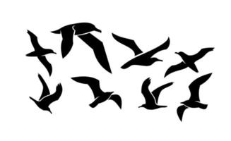 Set collection of seagull black vector icon design illustration