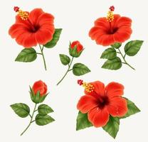 Realistic beautiful hibiscus flower vector