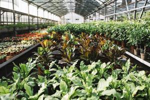 invernadero de plantas en macetas. concepto de fotografía hermosa de alta calidad y resolución foto