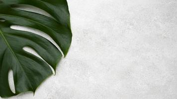 top view of monstera leaf with copy space. High quality and resolution beautiful photo concept