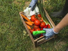 woman hands holding crate with fresh organic vegetable. High quality and resolution beautiful photo concept