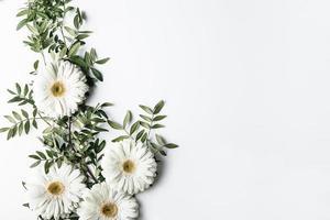 vista superior de margaritas blancas. concepto de fotografía hermosa de alta calidad y resolución foto