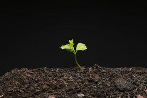 Todavía la vida crece plántula. concepto de fotografía hermosa de alta calidad y resolución foto