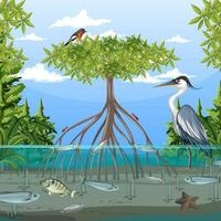 Mangrove forest scene at daytime with animals vector