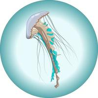 Vector composition of turquoise jellyfish