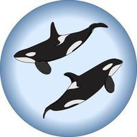 composición vectorial de dos orcas en estilo de dibujos animados vector