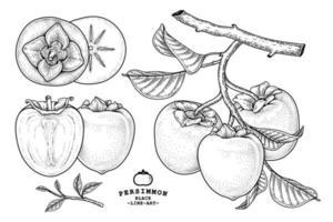 Set of hachiya persimmon fruit hand drawn elements botanical illustration vector