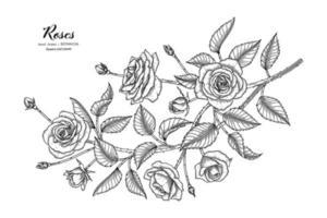 Roses flower and leaf hand drawn botanical illustration with line art. vector