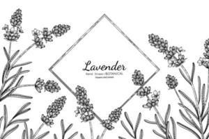 flor de lavanda y hojas dibujadas a mano ilustración botánica con arte lineal. vector