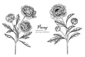 Peony flower and leaf hand drawn botanical illustration with line art. vector