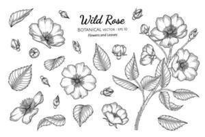 conjunto de flores y hojas de rosas silvestres dibujadas a mano ilustración botánica con arte lineal sobre fondos blancos. vector