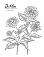 Set of Dahlia flower and leaf hand drawn botanical illustration with line art on white backgrounds. vector