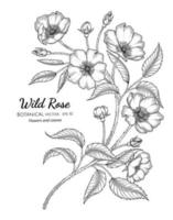Wild rose flower and leaf hand drawn botanical illustration with line art on white backgrounds. vector