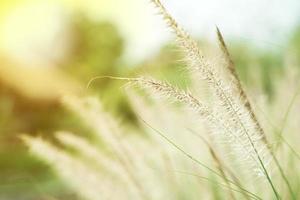 Cerca de la hierba flores en el campo con fondo de luz solar foto