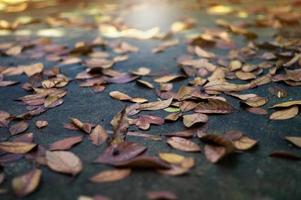 Texture and background selective focus of the dried leaves on the wet cement ground with sunny blurred foreground photo