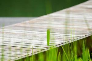 Selective focus on little dragonfly standing on the leaf of weed on wooden bridge photo