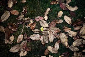 High exposure picture of dried and green leaves fell on wet concrete ground. Vintage texture and background of autumn scene with colorful leaves on the floor photo