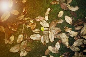 High exposure picture of dried and green leaves fell on wet concrete ground. Vintage texture, sunny edit, and background of autumn scene with colorful leaves on the floor photo