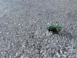 Enfoque selectivo de un arbolito que crece en un pequeño agujero de asfalto en la calle foto