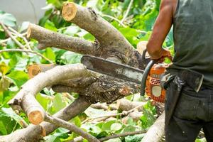 Close up of chainsaw cutting the log by chainsaw machine with sawdust flying around. photo