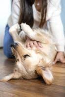 mujer acariciando perro en casa foto
