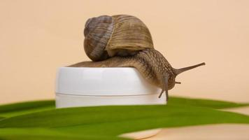 snail and mucin cream on beige background, beauty skin care photo