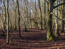 Winter in the woods at Skipwith Common North Yorkshire England photo